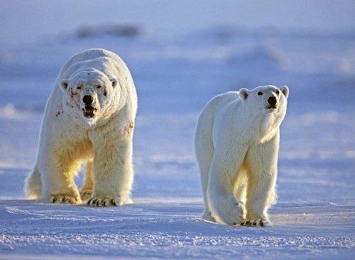 追逐动物 从非洲到北极